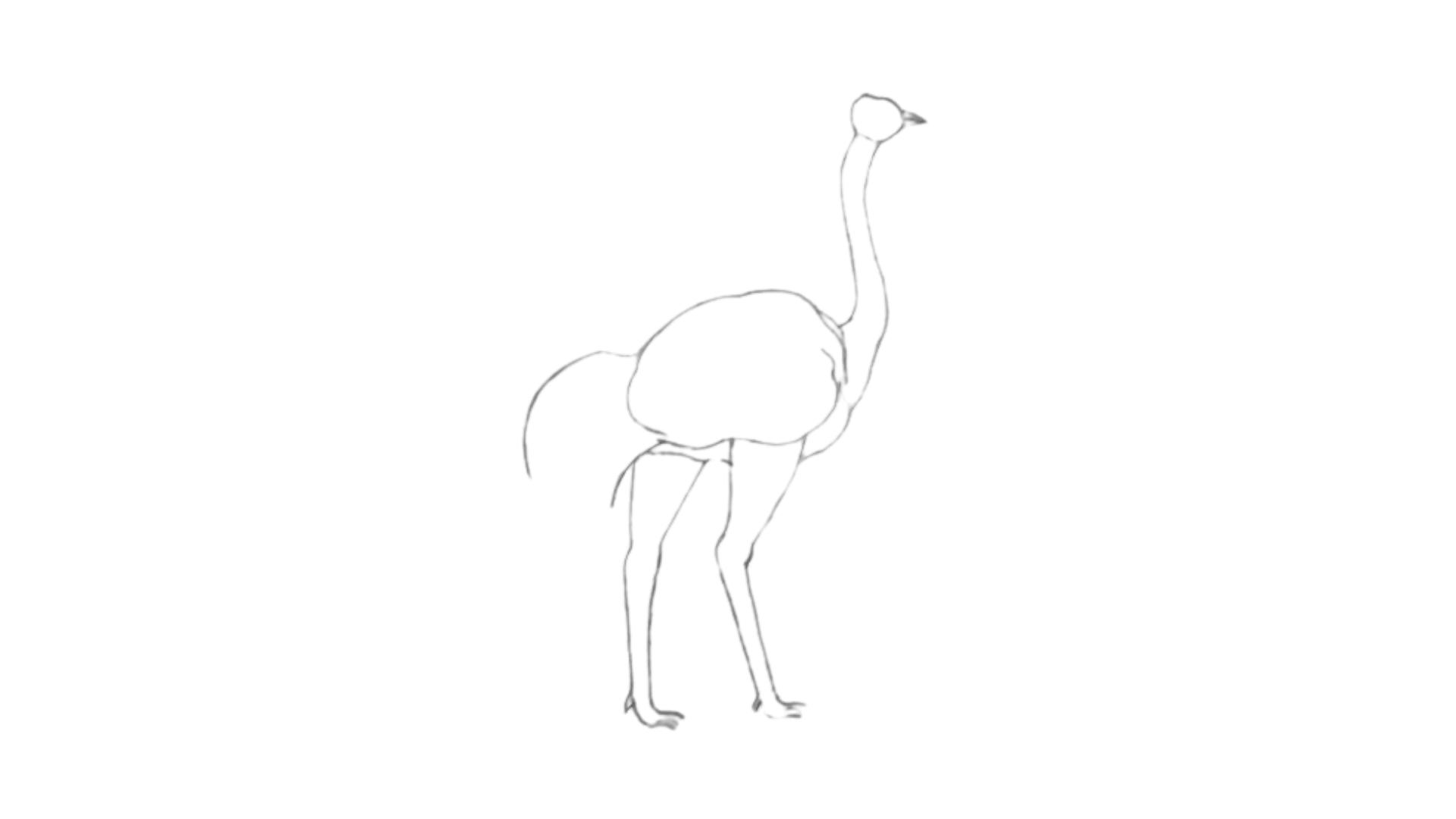 step Ostrich draw 7