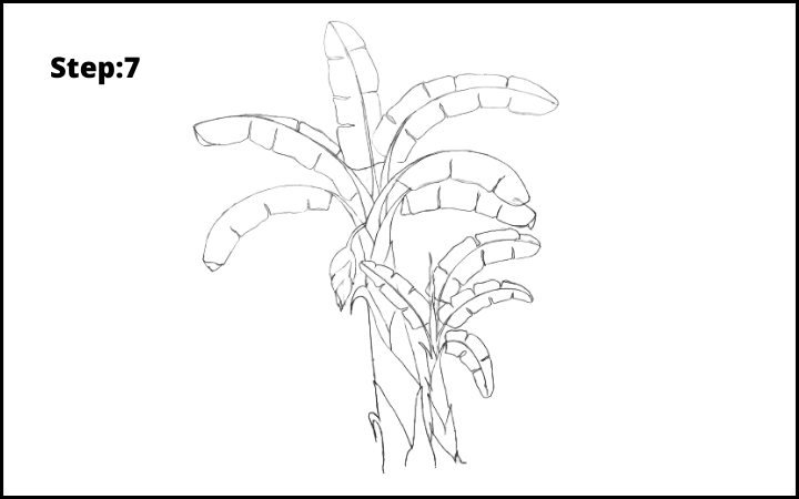 How to Draw Banana Tree Step 7