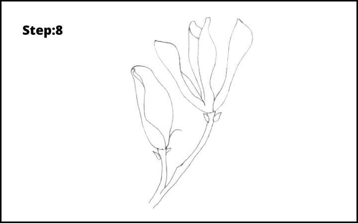 how to draw a magnolia flower step 8