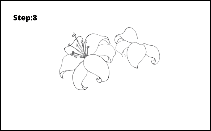 lily flower drawing step 8