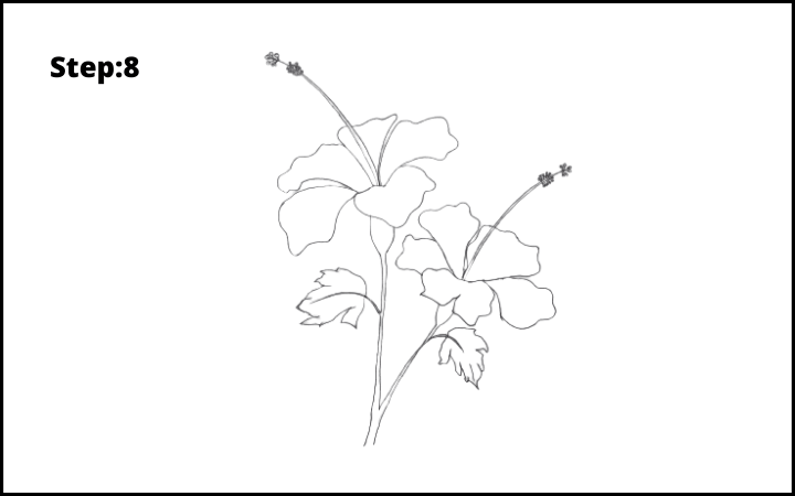 hibiscus drawing step 8