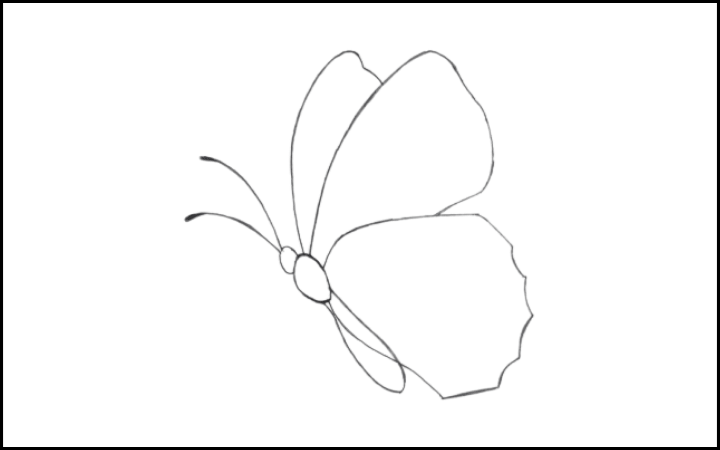 How to draw a butterfly step 8