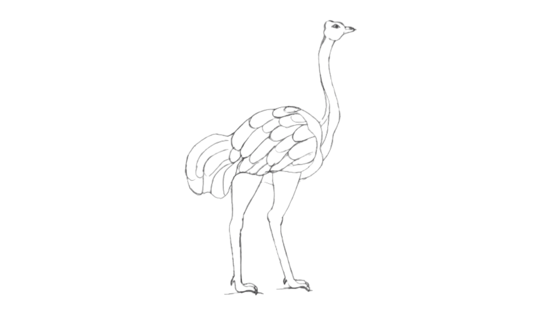 How To Draw an Ostrich step 8