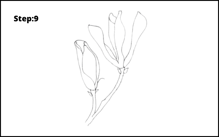 how to draw a magnolia flower step 9