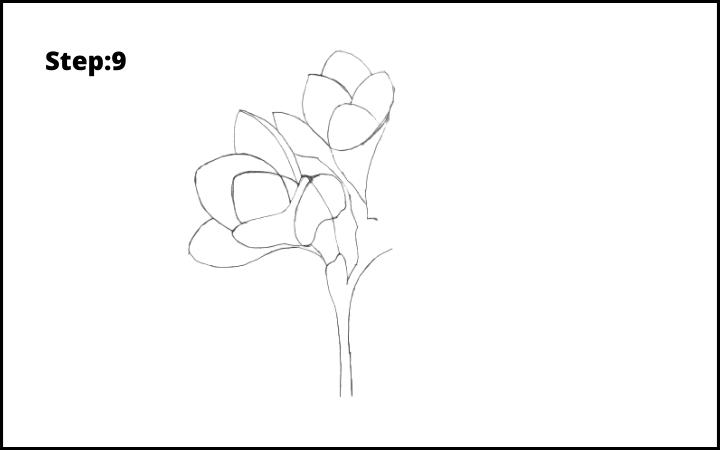 How to Draw Freesia Flower step 9
