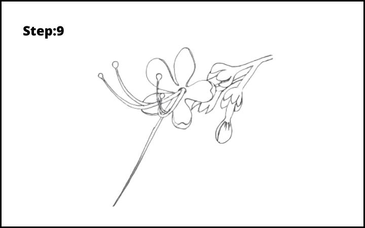 How to draw pagoda flower  step 9