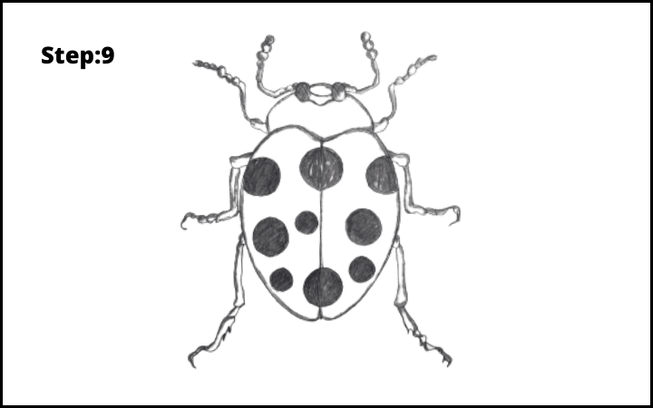 How to draw a bug  step 9, ladybug pencil drawing