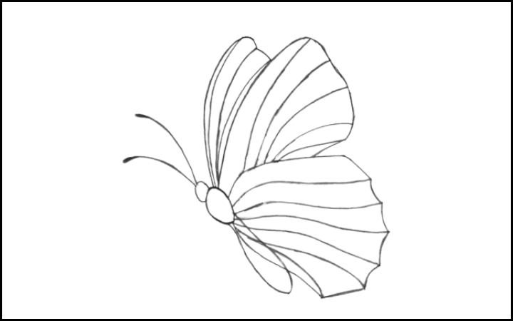 How to draw a butterfly step 9