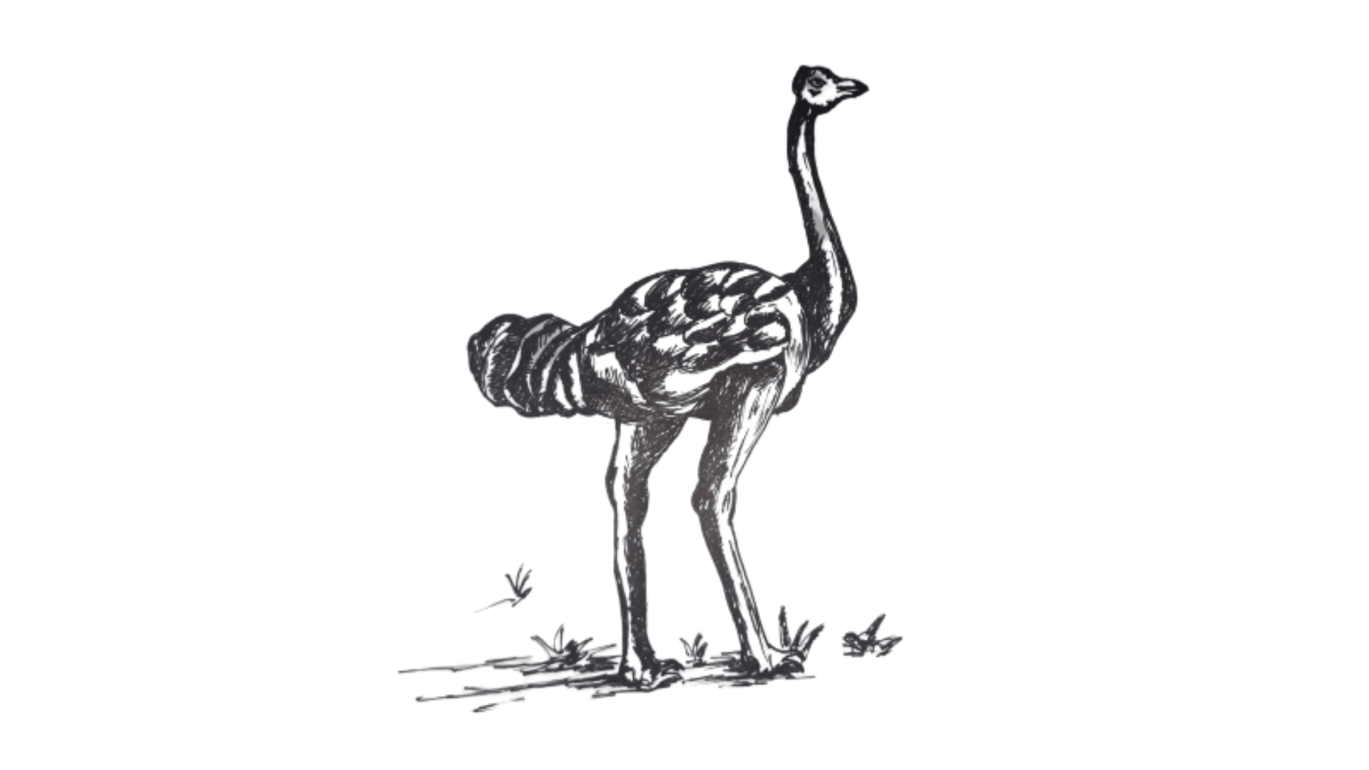 How To Draw an Ostrich step 9