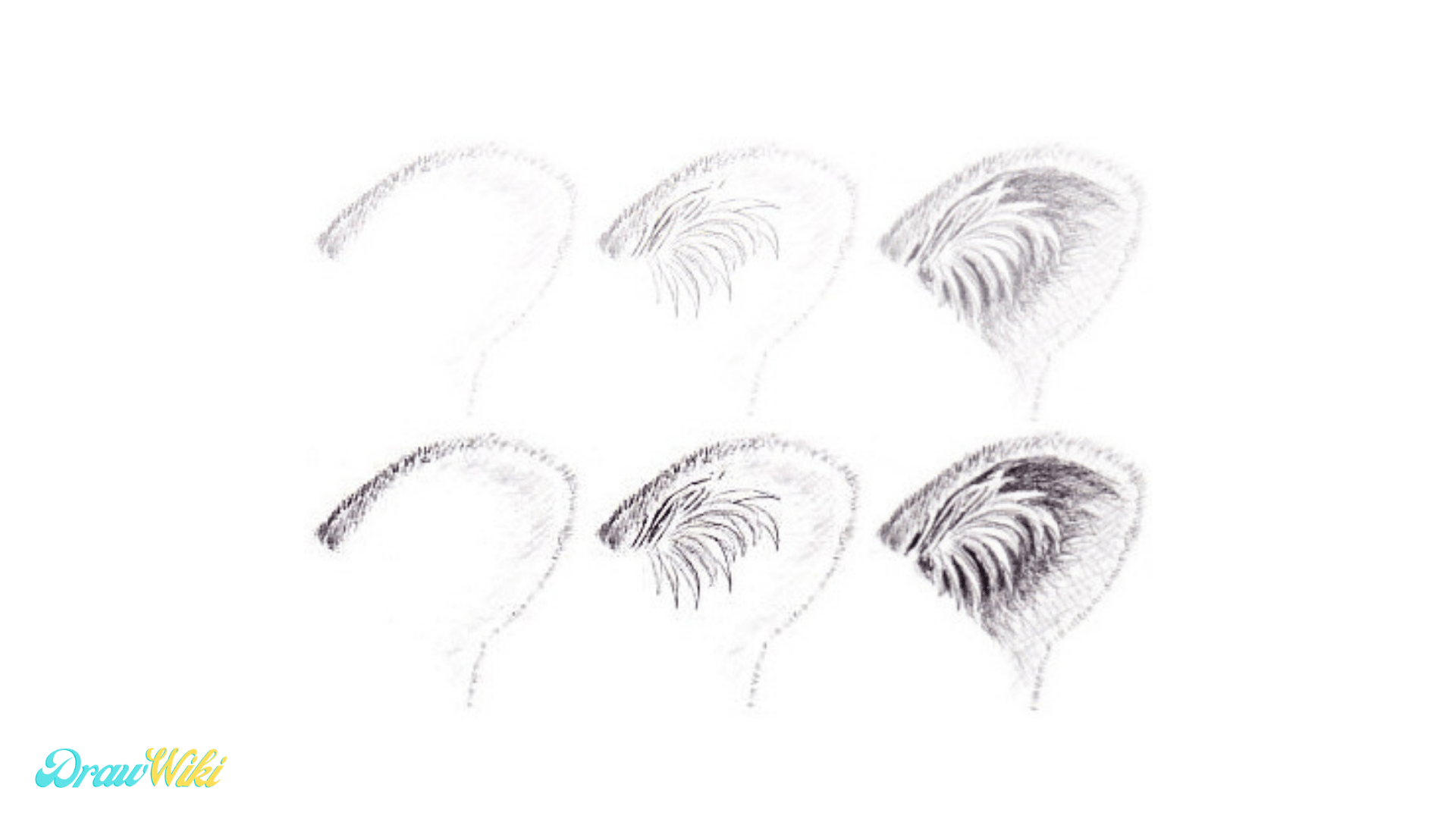 Step 9: Tiger Detailed Ears drawing
