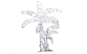 Draw Banana Tree, banana tree drawing