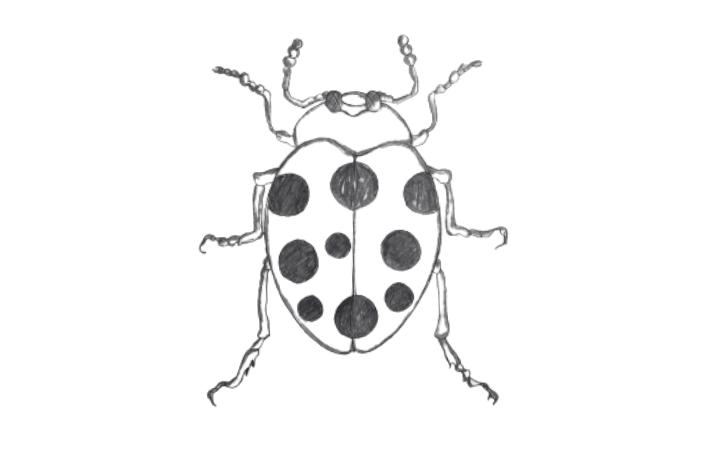 draw a bug