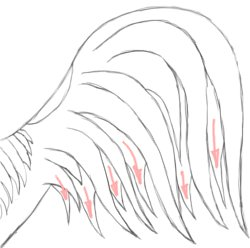 Step 8: Draw The Tail