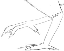 Step 9: Draw Leg and Claw Details