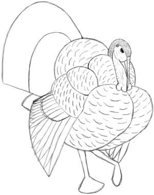 How to Draw a Turkey: Big Feathers