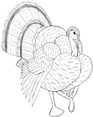 detail the tail feathers