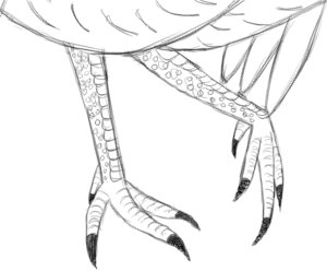 Step 9: Legs and Feet Details