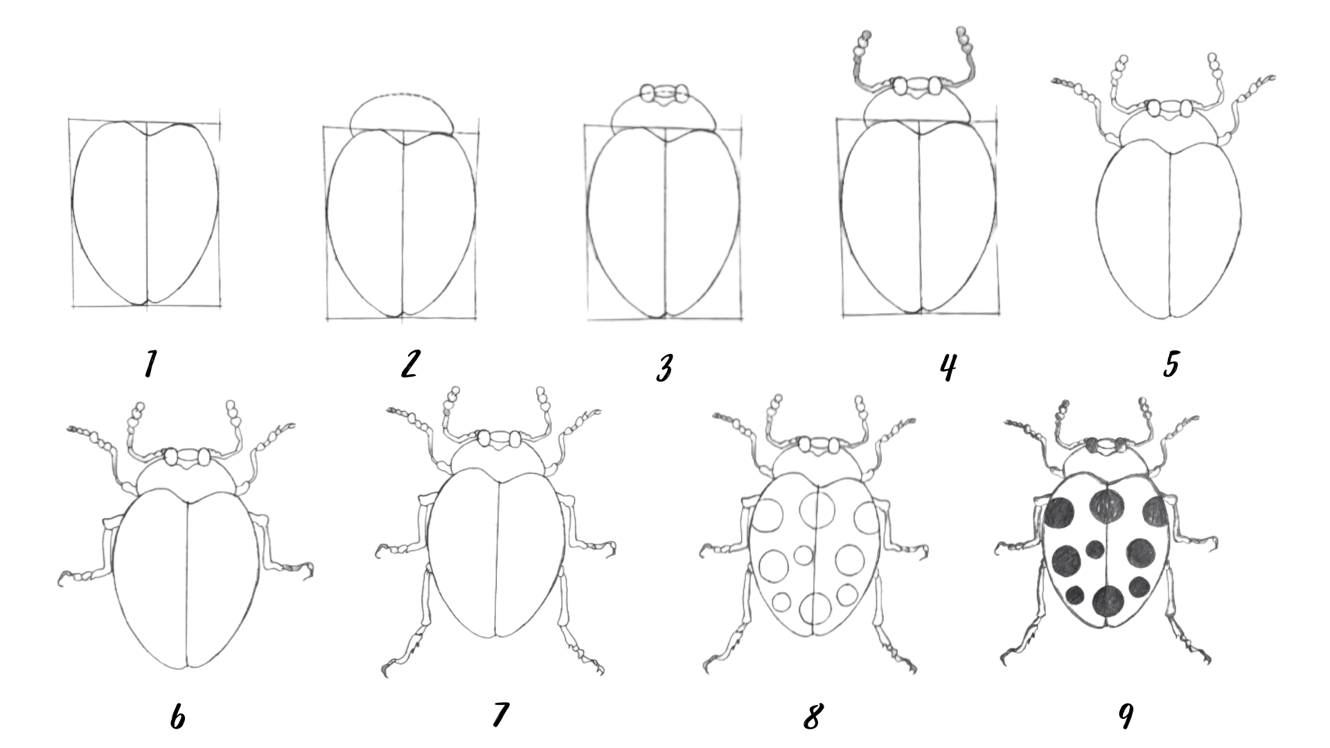 How to draw a bug