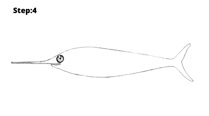 Step-4 : Draw the fish Tail