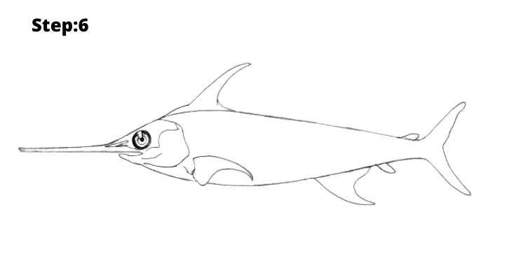 Step-6 : Draw the fish gill cover